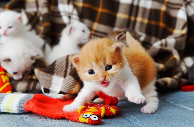 猫のマネをする!