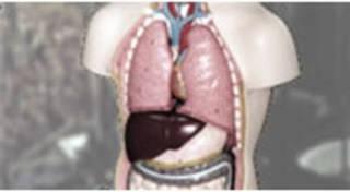 解剖生理学専門コース/セラピストの必須講座