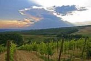 UMAO 短期ワイン鑑定士スクール