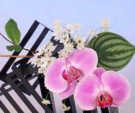 【10回完結★】~特別コース~ 気軽に生け花 『暮らしの中に花を』
