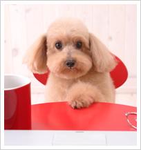 【ペット講座資格取得相談会】人気のペット関連のお仕事♪ペットの高齢化に伴い、今需要が高いお仕事です!