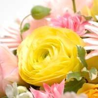 【フラワー心理セラピスト】花の心理セラピスト:1級コース|大好きなフラワーをお仕事にしたい方に!