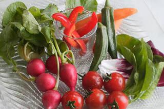 ジュニア 野菜ソムリエ コース 中部・北陸地域