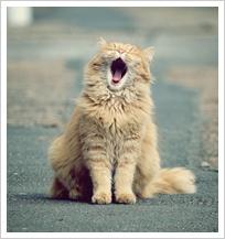 【愛猫健康講座】愛猫家としての知識・教養を身につける!