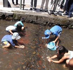 JFW2016明神川で魚と遊ぼう「魚つかみ大会」