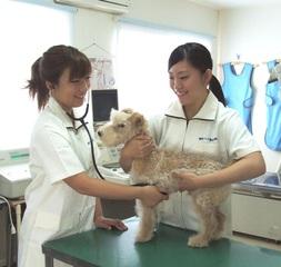 動物看護師科