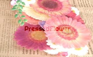 メルヴェイユ コロン フラワーズ&nbspMERVEILLE CRN flowers 滋賀・守山教室
