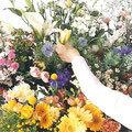 子ども花育インストラクター 【3級コース】|芙和せら(フラワー心理セラピー)の花育がスタートします♪