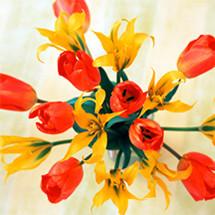 【フラワー心理セラピスト】花の心理セラピスト:1級コース|フラワーアレンジメントをプロの仕事に!