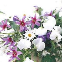 子ども花育インストラクター【2級コース】|芙和せら(フラワー心理セラピー)の花育がスタートします♪
