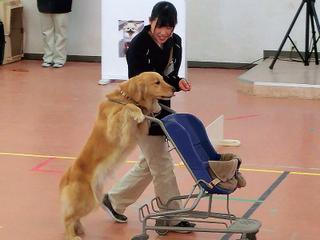 ドッグトレーナー科 特殊犬(使役犬)訓練SP体験