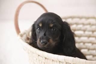 【通信】愛犬家の皆様へ♪より良いペットライフを充実する為の ドッグライフアドバイザー入門講座