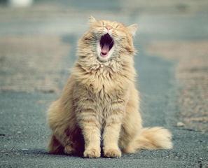 【通信】愛猫家にためのスペシャルな猫講座♪猫を知り尽くしたいあなたへ。キャットケアスペシャリスト講座