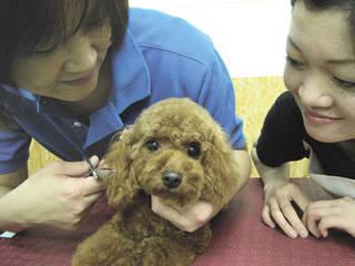 獣医師によるドッグマッサージ師養成講座 メディカルコース(大阪ド...